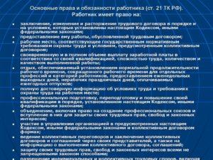 Основные трудовые права и обязанности работника